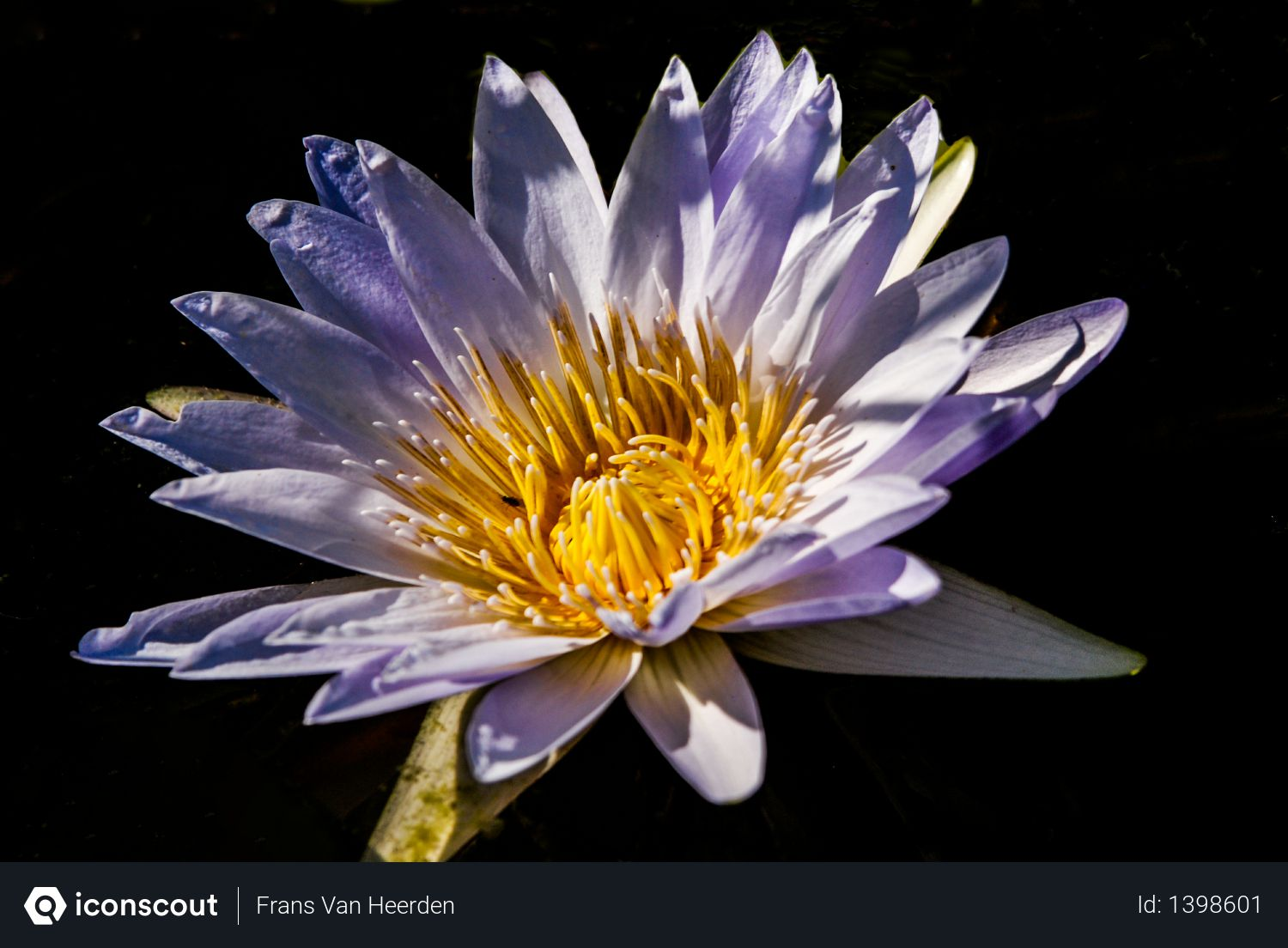 Beautiful flowers, flower, south africa Photo