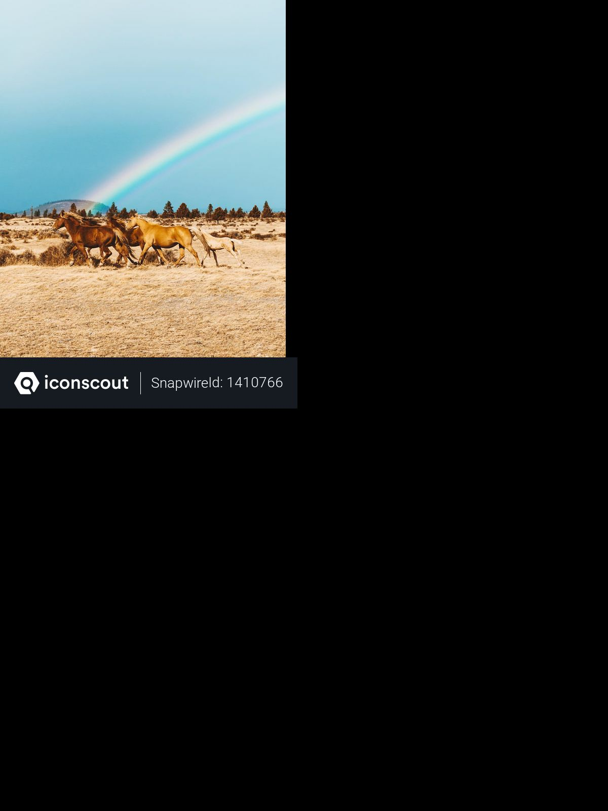 Horse and rainbow Photo