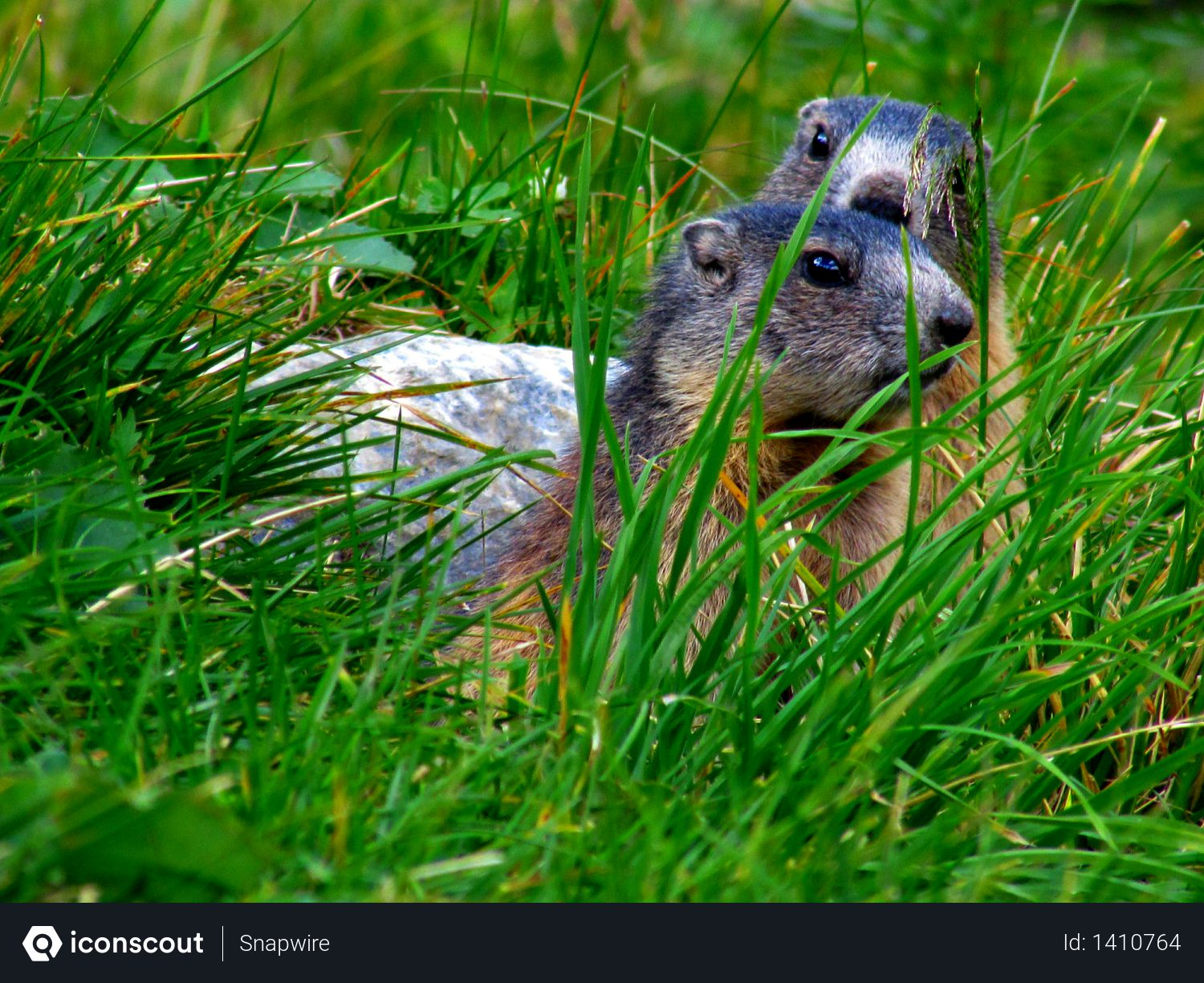 In grass seating animal Photo