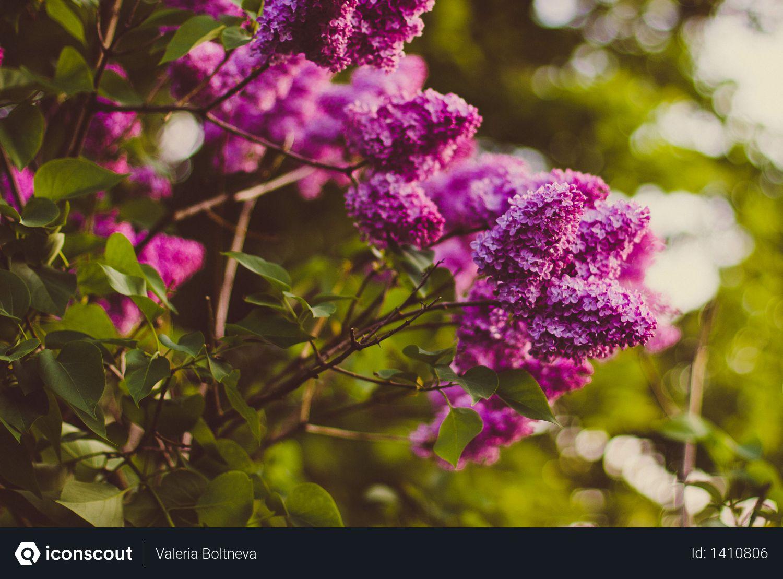 Purple Cluster Petaled Flower Focus Photography Photo
