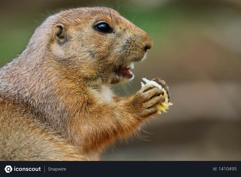 Squirrel Photo