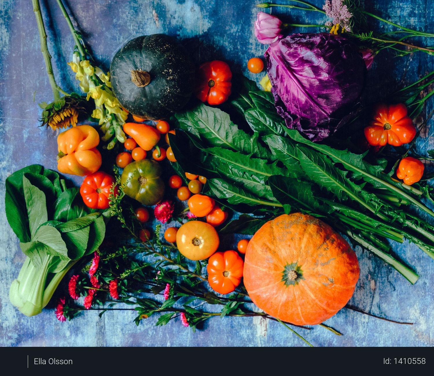 Variety of Vegetables Photo