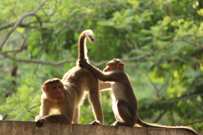 Monkeys Funny