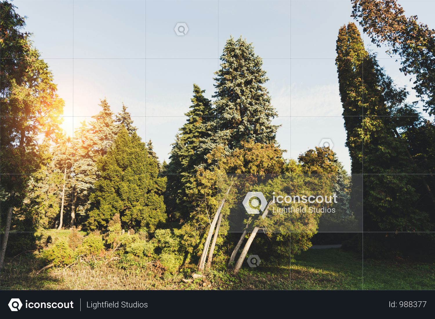 Beautiful Green Trees And Bushes In Tranquil Autumn Park Photo