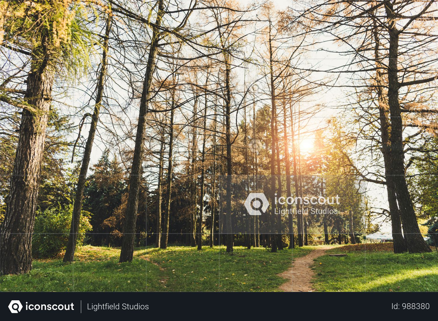 Beautiful Green Trees And Pathway In Autumn Park At Sunrise Photo