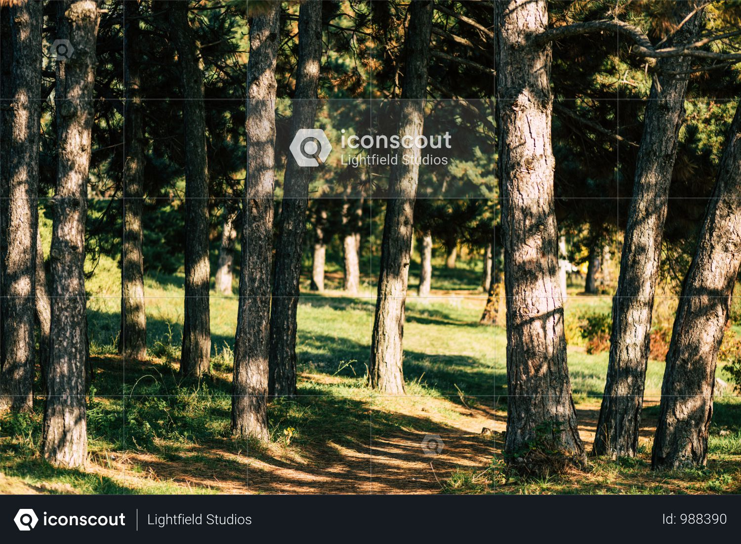 Beautiful Trees In Autumn Forest At Sunny Day Photo