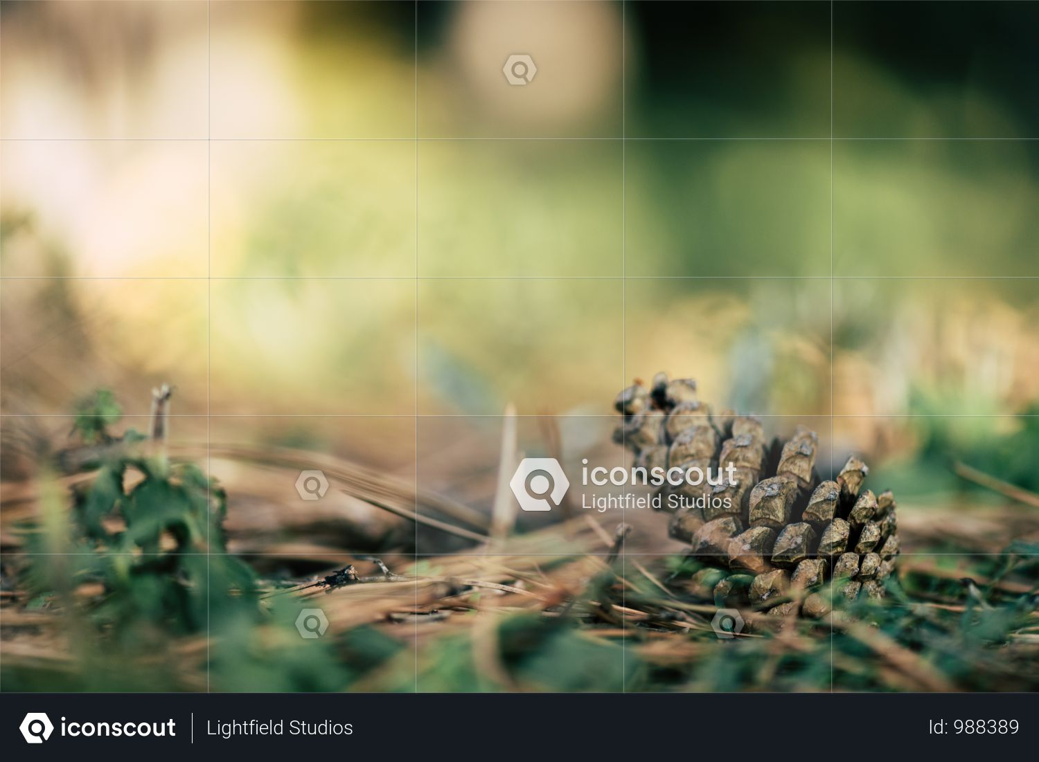 Close-up View Of Beautiful Pine Cone On Soil In Autumn Park Photo
