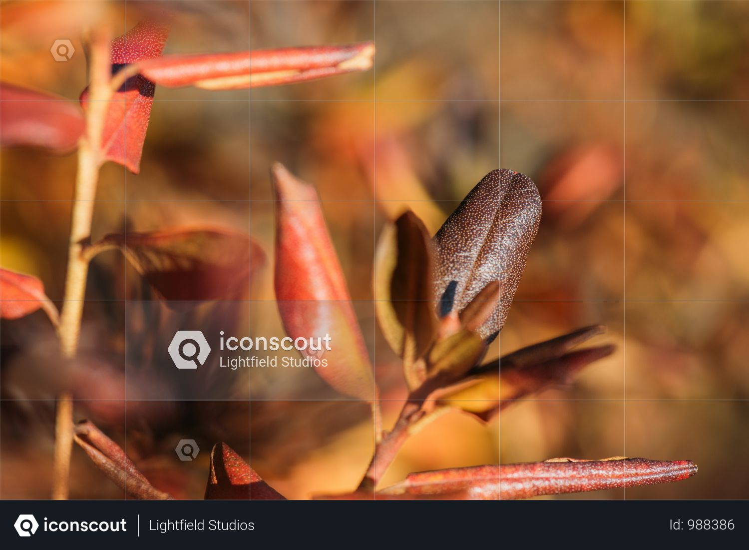 Close-up View Of Beautiful Red Autumn Leaves Photo