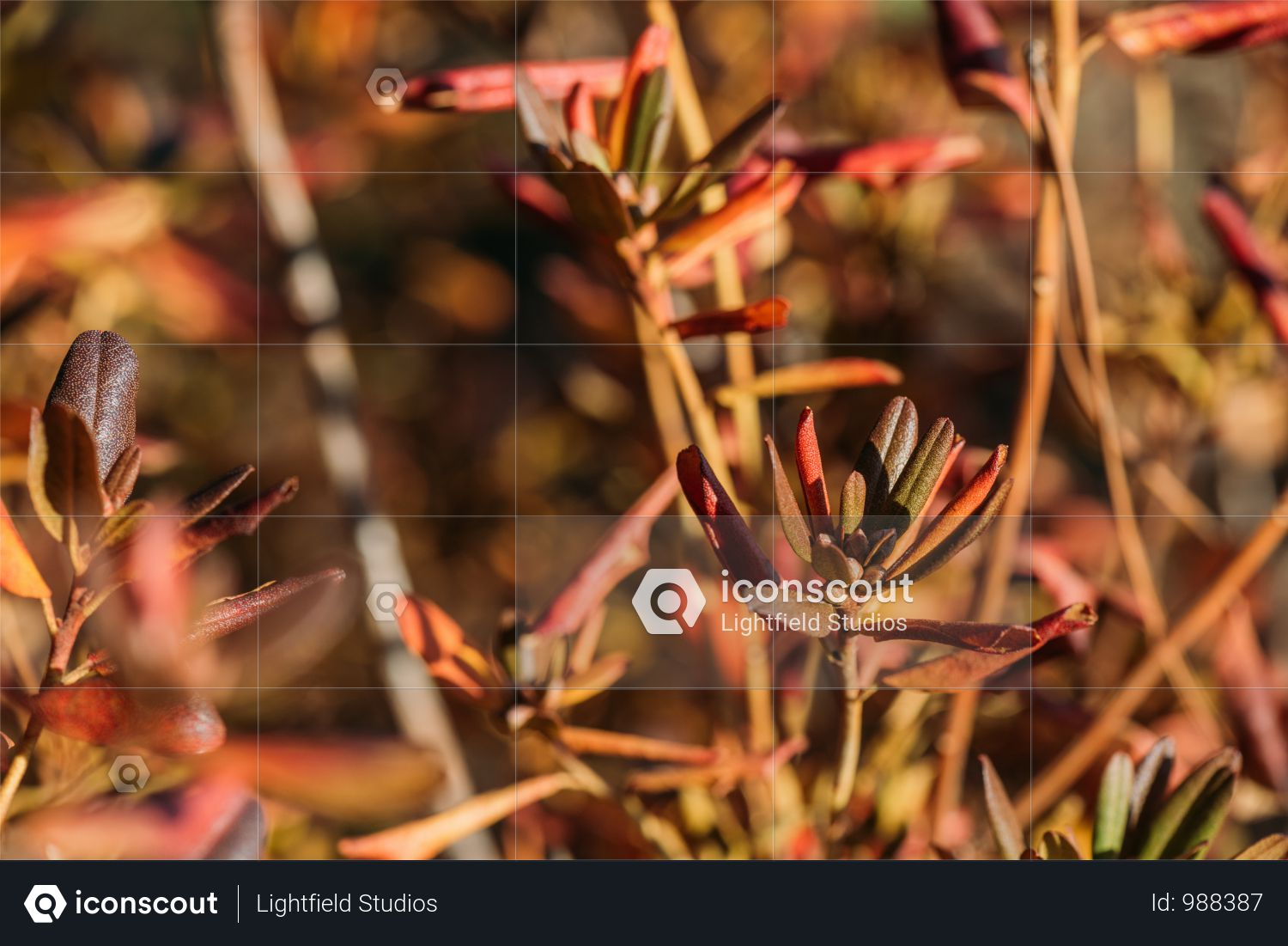 Close-up View Of Beautiful Red Autumn Leaves On Branches Photo