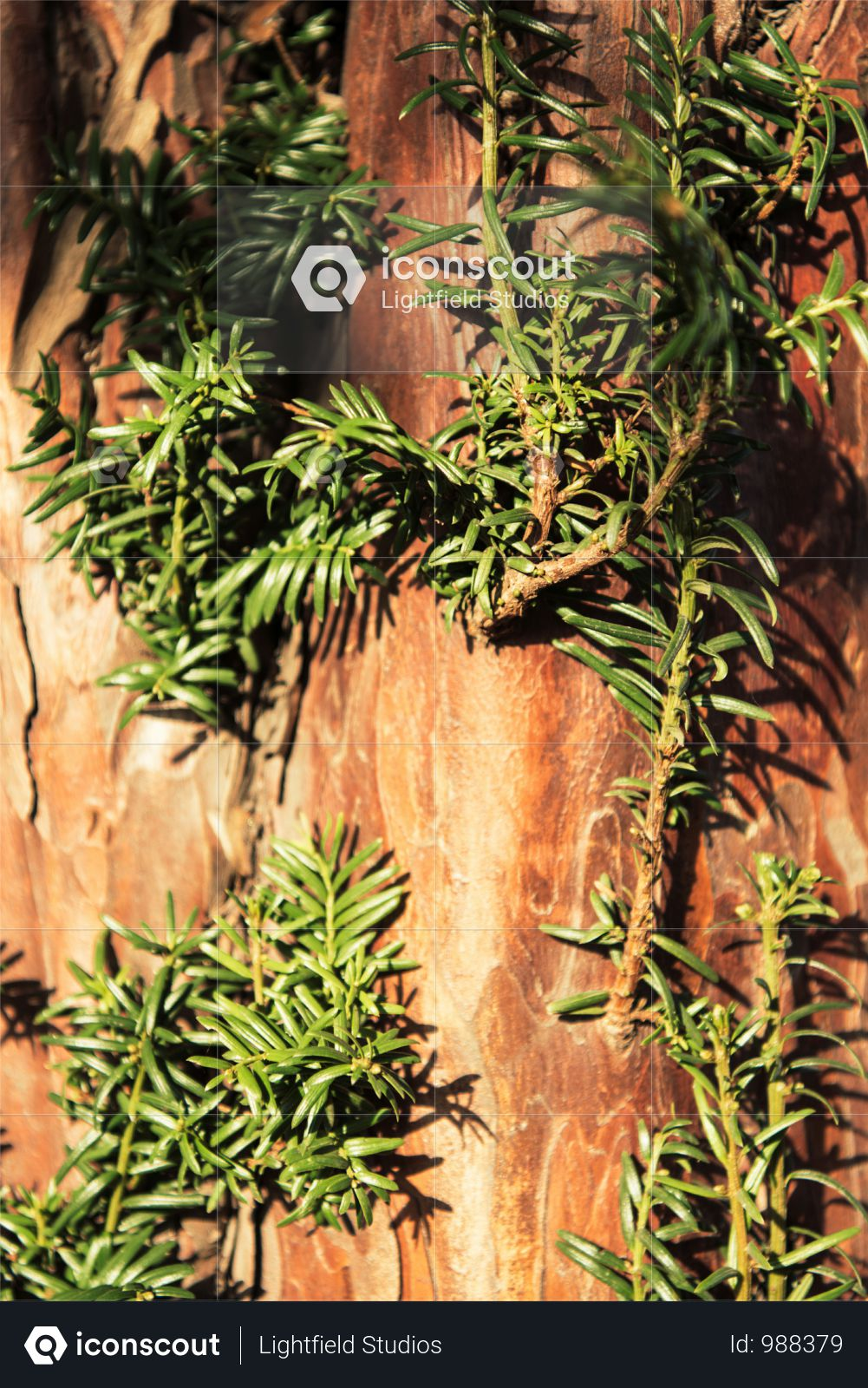 Close-up View Of Brown Tree Bark With Green Branches Photo