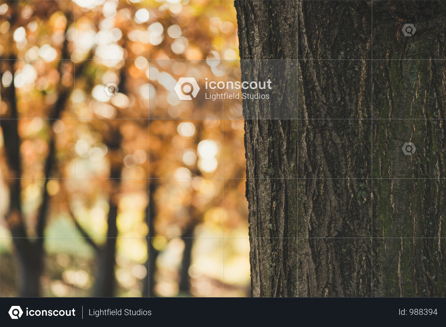 Close-up View Of Tree Bark In Autumn Forest Photo