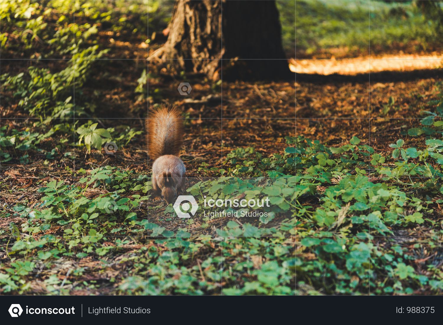 Furry Little Squirrel Running On Soil In Autumn Forest Photo