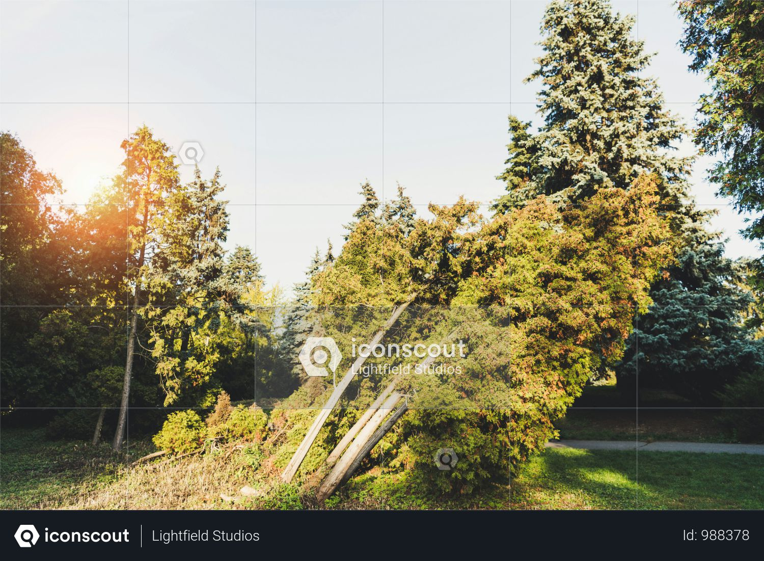 Green Trees And Bushes In Tranquil Autumn Park Photo