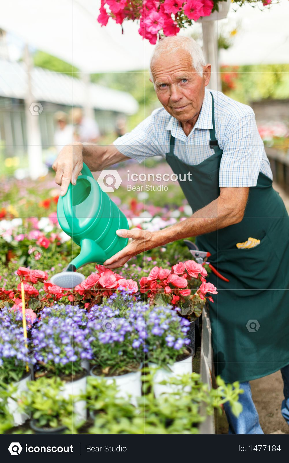 Premium Older Man Taking Care Of Plants In His Greenhouse