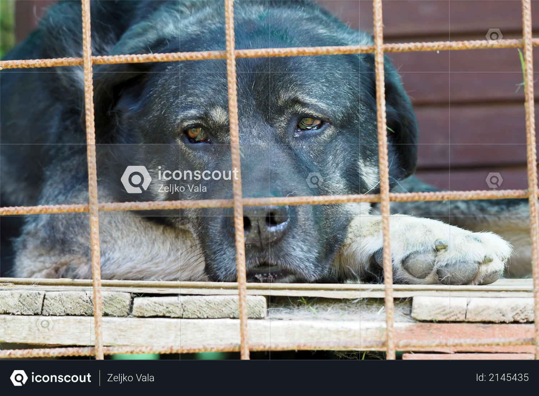 Sad black dog lies on the floor behind bars Photo