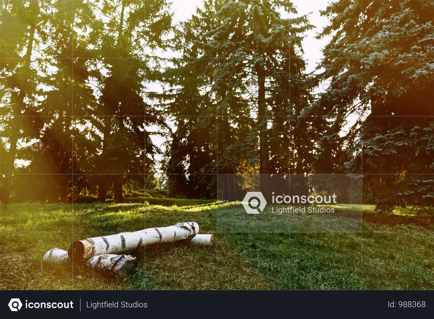 Stumps In Beautiful Autumn Forest At Sunrise Photo