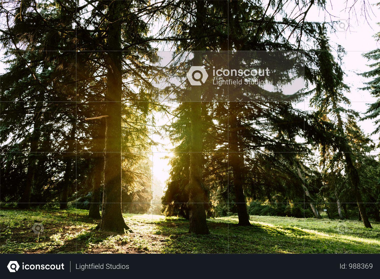 Sunrise In Beautiful Scenic Autumn Forest Photo