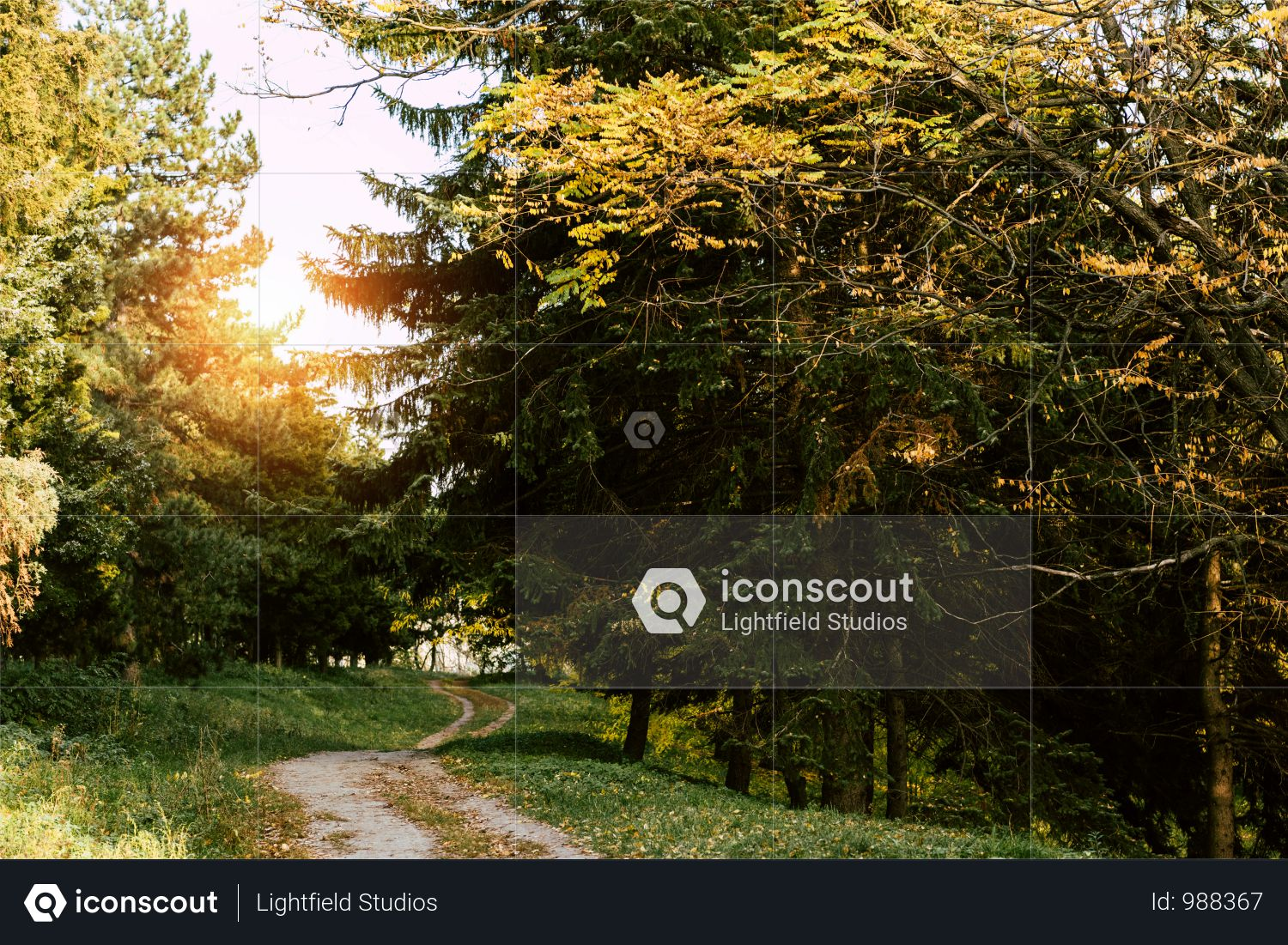 Trail In Beautiful Autumn Park At Sunrise Photo