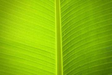 Leaf Background Stock Images
