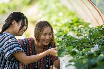 Strawberry Farm Visit Shoot