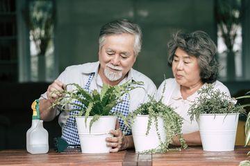 Home Gardening Shoot