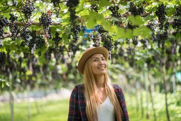 Grapes Farm Shoot
