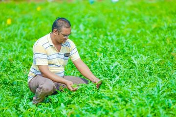 Farming And Agriculture Stock Images