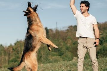 Man Playing With Dog Shoot