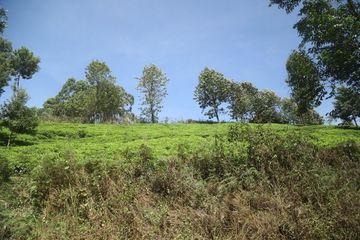 Tea Plantation Landscape Nairobi Kenya Africa Shoot
